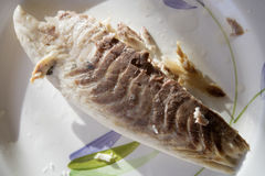 Steamed snapper fillet. Unseasoned dietetic steamed  snapper fillet Royalty Free Stock Photos