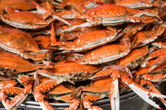 Steamed  spotted crab Royalty Free Stock Photo