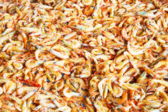 Steamed and Sun ried shrimps process Stock Photo