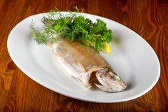 Steamed trout. Served lemon and parsley royalty free stock photo