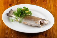 Steamed trout. Served lemon and parsley stock photography