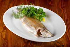 Steamed trout. Served lemon and parsley royalty free stock photography