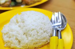 Steamed White Rice Royalty Free Stock Image