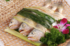 Steamed yellow croaker. The Chinese food of steamed croaker Royalty Free Stock Photos