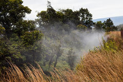 Steaming Bluff. On the caldera& x27;s edge of the Kīlauea  volcano Stock Images