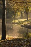 Steaming forest. After the rain,  the early sun makes the forest steam Royalty Free Stock Image