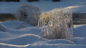 Frozen river in winter wonderland. Steaming frozen river in winter wonderland stock footage