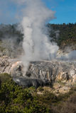 Steaming geysers in Rotorua Royalty Free Stock Images