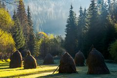 Steaming haystacks in the forest at sunrise. Steaming haystack in the forest at sunrise. rare rural background stock image