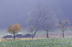 Steaming manure heaps. In an autumnal scenery stock photo