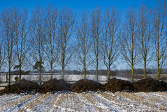 Steaming manure in a snowy stubble field. Piles of steaming manure in a snow covered stubble field in England in winter.  there is a line of leafless trees Royalty Free Stock Image