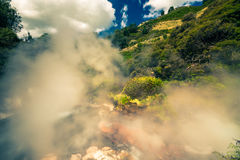 Steaming nature in New Zealand Royalty Free Stock Photo
