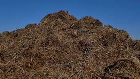 Steaming pile of manure on farm field in Dutch countryside.  stock footage
