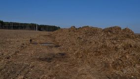 Steaming pile of manure on farm field in Dutch countryside.  stock video