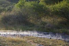 Steaming river at Lake Bogoria, Kenya Stock Photos