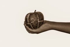 Genetic modified apple on girls hand Royalty Free Stock Image