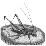 Steampunk grasshopper. Original hand drawn ink illustration stock illustration