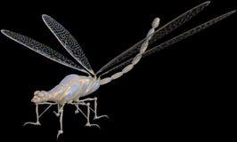 Steampunk maszyna, Dragonfly insekt, Odizolowywający Fotografia Stock