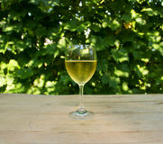 Steamy Glass of White Wine Royalty Free Stock Photos