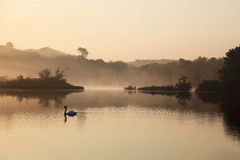 Steamy Morning on the River. Stock Images