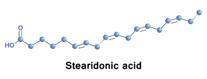 Stearidonic is an omega 3 fatty acid,. Sometimes called moroctic acid, it is biosynthesized from ALA. Sources of this it are seed oils of hemp, blackcurrant Stock Photography