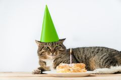 Stearinljus för kattfödelsedagkaka Kakafödelsedag arkivfoton