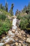 Steavenson cai cachoeira perto de Marysville, Austrália Fotografia de Stock Royalty Free