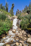 Steavenson Falls waterfall near Marysville, Australia Royalty Free Stock Photography