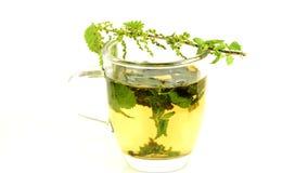 Stechende Nessel, Lebensmittel und Heilpflanze, Tee stock video