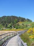 Stechginster-Weg Stockbild