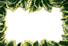 Stechpalme-Rand Lizenzfreies Stockbild