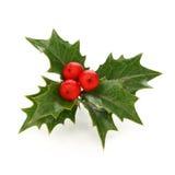 Stechpalmebeere Sprig, Weihnachtssymbol Stockbilder