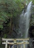Stechpalmewasserfall Stockbild