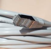Stecker des Ethernets RJ45 Stockbild