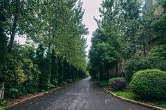 Stedelijk de valleilandschap van de Parkweg in China stock fotografie