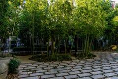 Stedelijke bamboebomen stock fotografie
