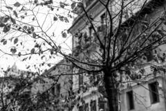 Stedelijke boom zonder bladeren droevig op een koude dag royalty-vrije stock afbeelding