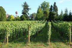 Stedelijke druivenboomgaard, Troutdale OF. Royalty-vrije Stock Foto's