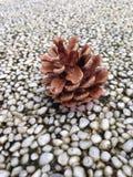 Stedelijke pinecone Stock Afbeelding