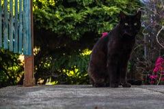 Stedelijke planten van katten de zwarte dieren stock afbeelding