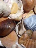 Stedelijke shells Royalty-vrije Stock Afbeelding