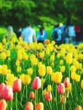 Stedelijke tulpen royalty-vrije stock afbeelding