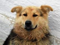 Stedelijke verdwaalde honden Stock Afbeeldingen