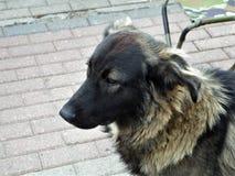 Stedelijke verdwaalde honden Stock Fotografie