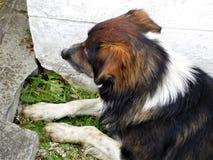 Stedelijke verdwaalde honden Royalty-vrije Stock Afbeelding
