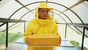 Stedicam shot of beekeeper with wodden frames walking and inspecting beehives in apiary stock video