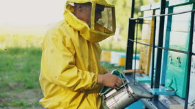 Stedicam shot of young beekeeper man smoking bees away from beehive in apiary stock footage