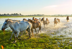 The steeds Stock Photography