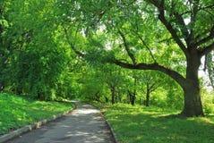 Steeg bij park en eik stock foto