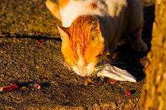 Steeg Cat Eating stock afbeelding
